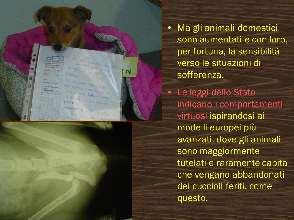 Ma gli animali domestici sono aumentati e con loro, per fortuna, la sensibilità verso le situazioni di sofferenza. Le leggi dello Stato indicano i com