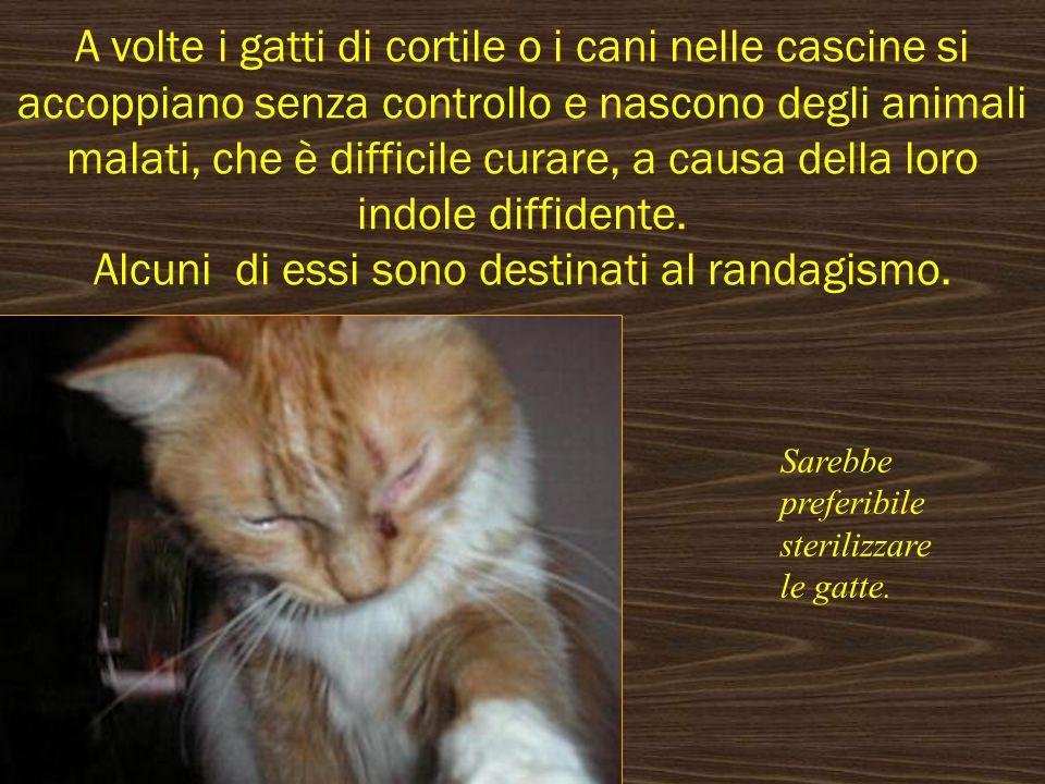 A volte i gatti di cortile o i cani nelle cascine si accoppiano senza controllo e nascono degli animali malati, che è difficile curare, a causa della