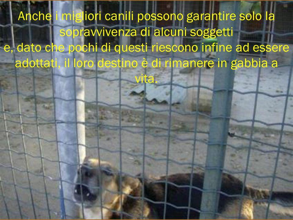 Anche i migliori canili possono garantire solo la sopravvivenza di alcuni soggetti e, dato che pochi di questi riescono infine ad essere adottati, il