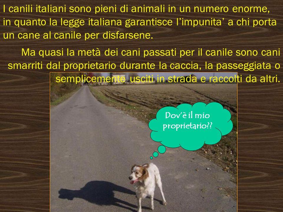 I canili italiani sono pieni di animali in un numero enorme, in quanto la legge italiana garantisce limpunita a chi porta un cane al canile per disfar