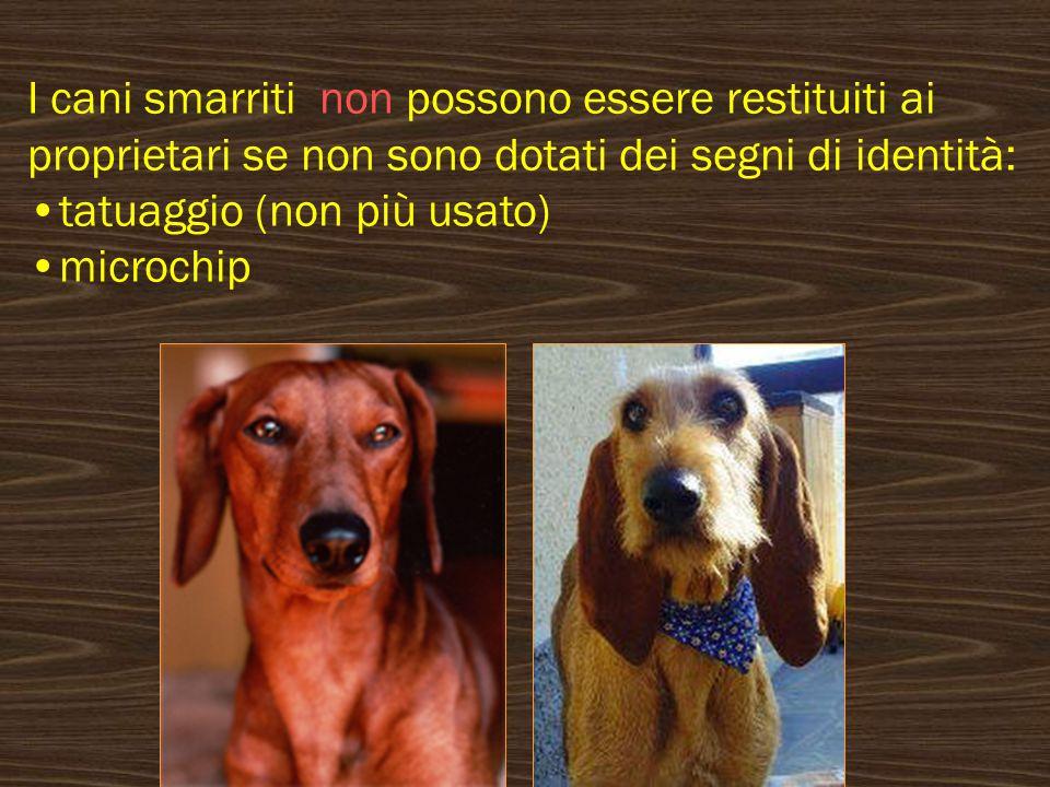 I cani smarriti non possono essere restituiti ai proprietari se non sono dotati dei segni di identità: tatuaggio (non più usato) microchip