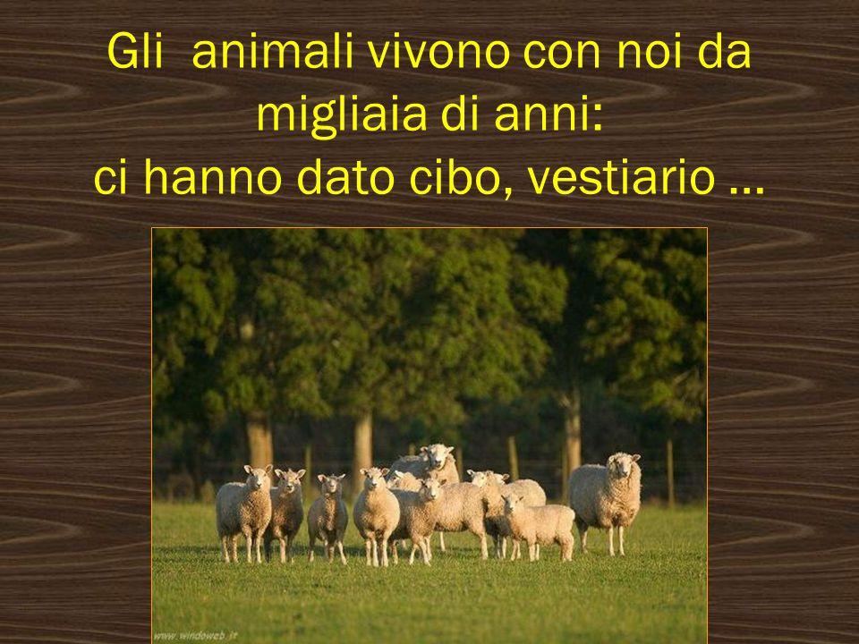 Gli animali vaganti, quelli senza proprietario, vengono portati al canile.