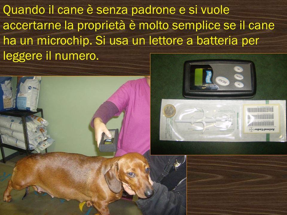 Quando il cane è senza padrone e si vuole accertarne la proprietà è molto semplice se il cane ha un microchip. Si usa un lettore a batteria per legger