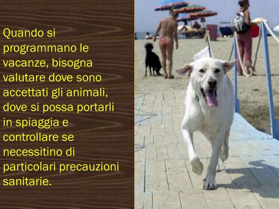 Quando si programmano le vacanze, bisogna valutare dove sono accettati gli animali, dove si possa portarli in spiaggia e controllare se necessitino di