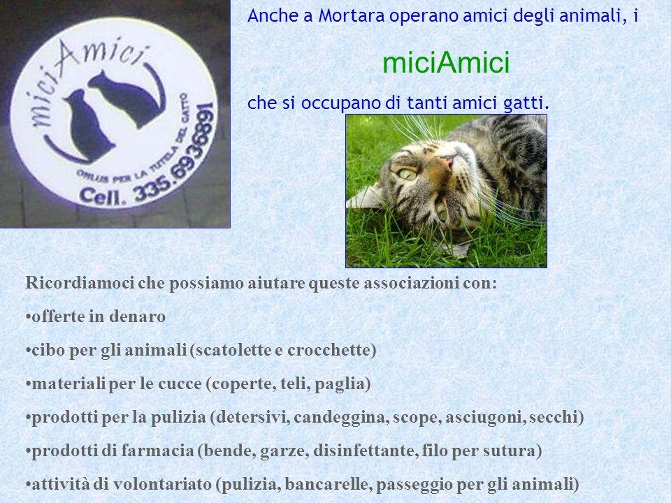 Anche a Mortara operano amici degli animali, i miciAmici che si occupano di tanti amici gatti. Ricordiamoci che possiamo aiutare queste associazioni c