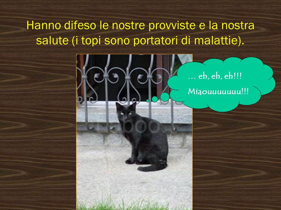 I canili italiani sono pieni di animali in un numero enorme, in quanto la legge italiana garantisce limpunita a chi porta un cane al canile per disfarsene.