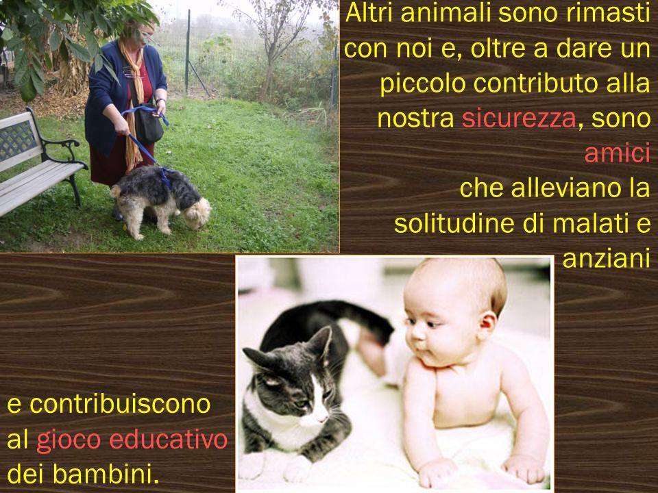 La legge prevede che, dopo i due mesi di età oppure entro 15 giorni dallentrata in possesso, tutti i cani debbano venire iscritti allanagrafe canina.