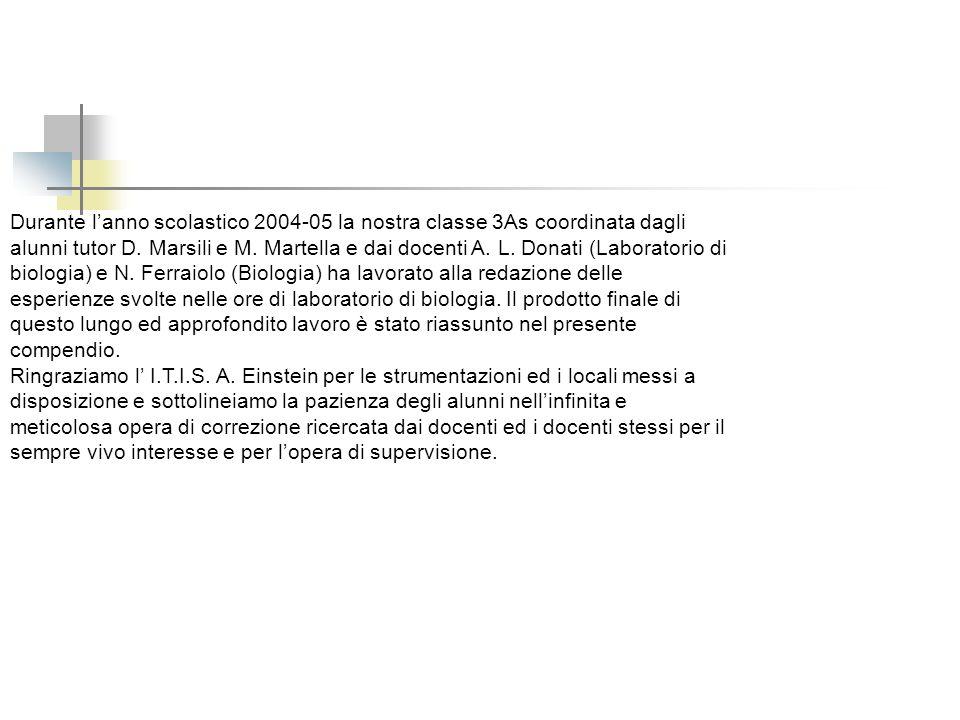 Durante lanno scolastico 2004-05 la nostra classe 3As coordinata dagli alunni tutor D. Marsili e M. Martella e dai docenti A. L. Donati (Laboratorio d