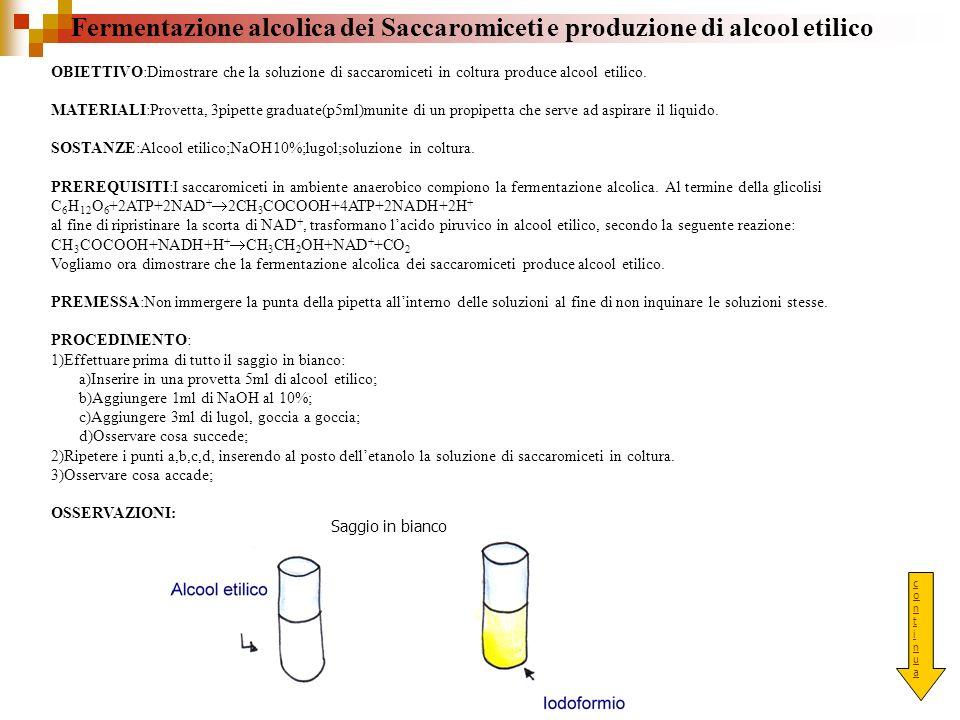 Fermentazione alcolica dei Saccaromiceti e produzione di alcool etilico OBIETTIVO:Dimostrare che la soluzione di saccaromiceti in coltura produce alco