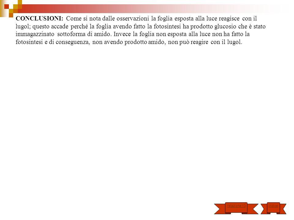 CONCLUSIONI: Come si nota dalle osservazioni la foglia esposta alla luce reagisce con il lugol; questo accade perché la foglia avendo fatto la fotosin