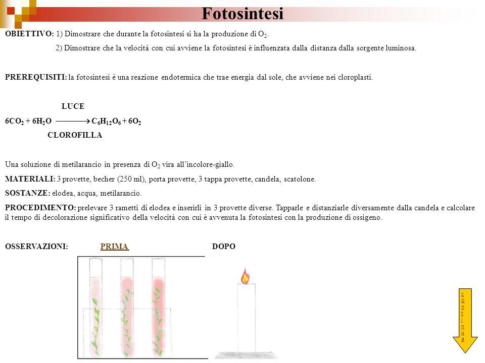 Fotosintesi OBIETTIVO: 1) Dimostrare che durante la fotosintesi si ha la produzione di O 2. 2) Dimostrare che la velocità con cui avviene la fotosinte