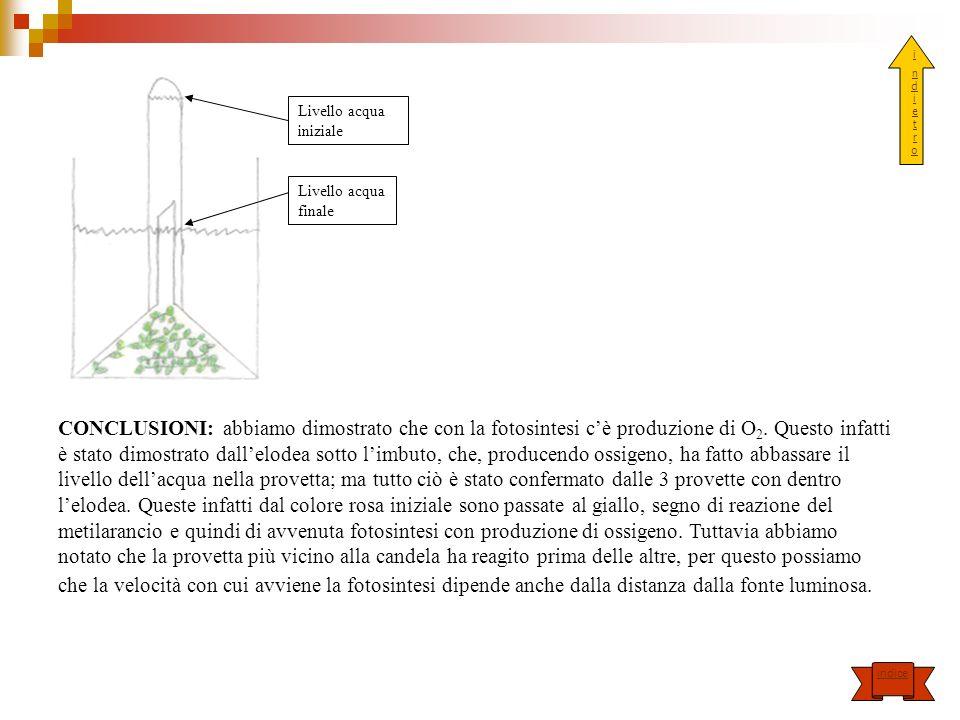 Livello acqua finale Livello acqua iniziale CONCLUSIONI: abbiamo dimostrato che con la fotosintesi cè produzione di O 2. Questo infatti è stato dimost