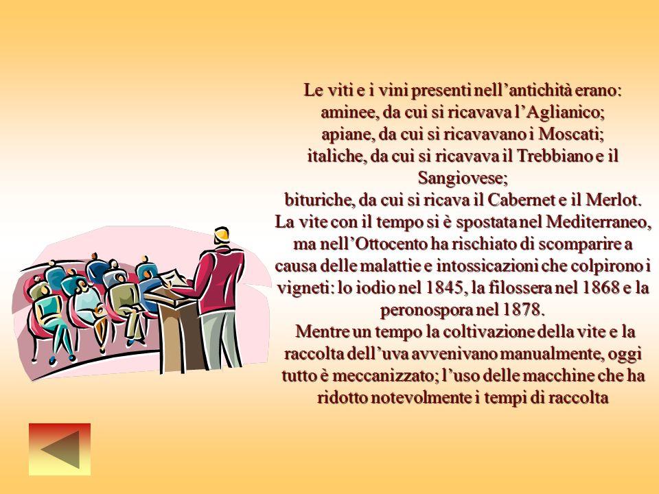 Le viti e i vini presenti nellantichità erano: aminee, da cui si ricavava lAglianico; apiane, da cui si ricavavano i Moscati; italiche, da cui si ricavava il Trebbiano e il Sangiovese; bituriche, da cui si ricava il Cabernet e il Merlot.