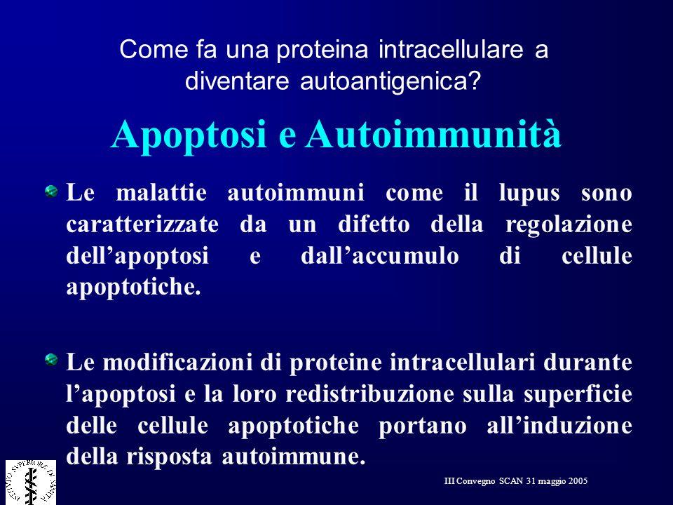 III Convegno SCAN 31 maggio 2005 Apoptosi e Autoimmunità Le malattie autoimmuni come il lupus sono caratterizzate da un difetto della regolazione dell