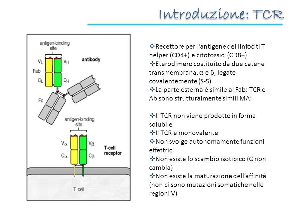 Introduzione: TCR Recettore per lantigene dei linfociti T helper (CD4+) e citotossici (CD8+) Eterodimero costituito da due catene transmembrana, α e β