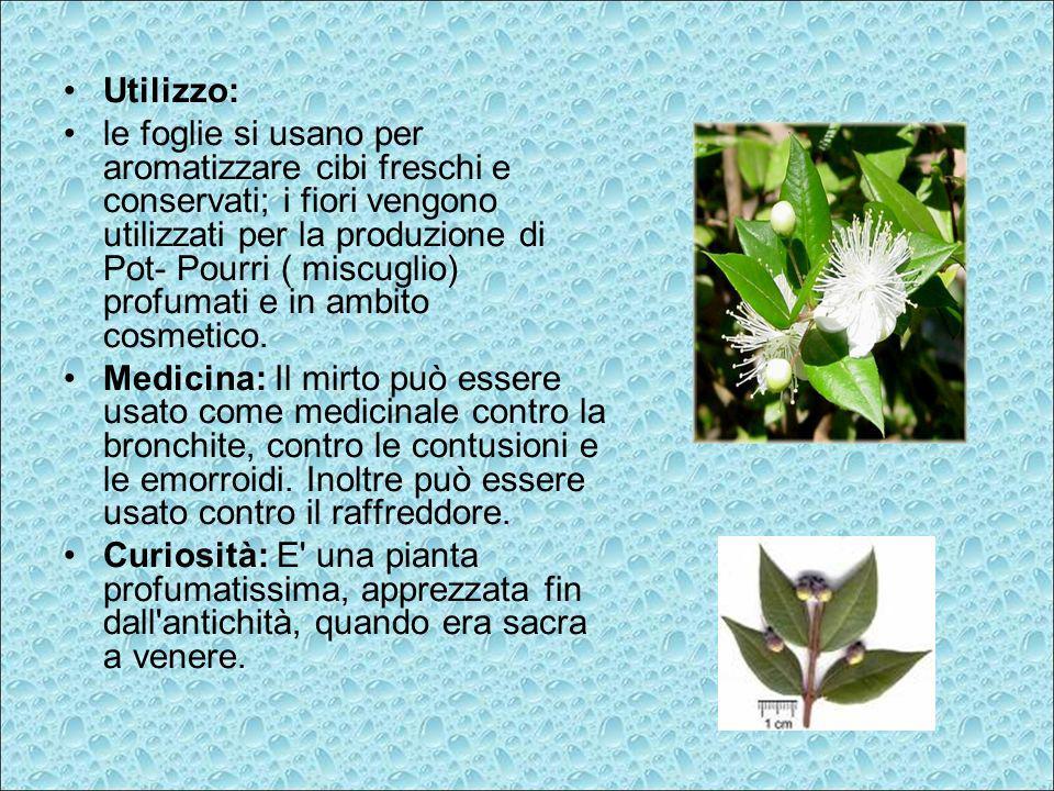 Utilizzo: le foglie si usano per aromatizzare cibi freschi e conservati; i fiori vengono utilizzati per la produzione di Pot- Pourri ( miscuglio) prof