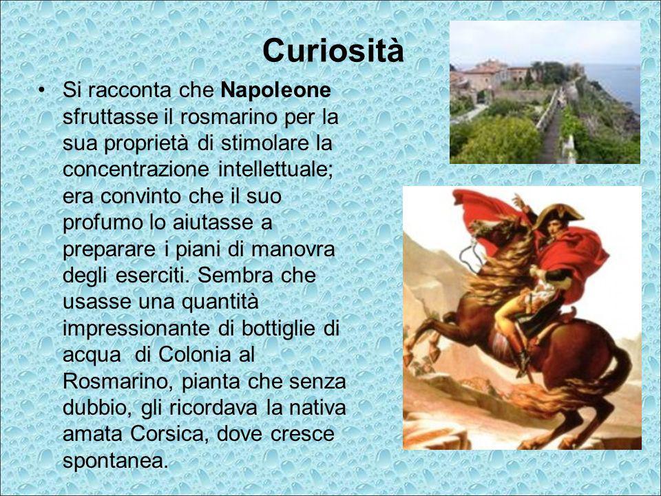 Curiosità Si racconta che Napoleone sfruttasse il rosmarino per la sua proprietà di stimolare la concentrazione intellettuale; era convinto che il suo