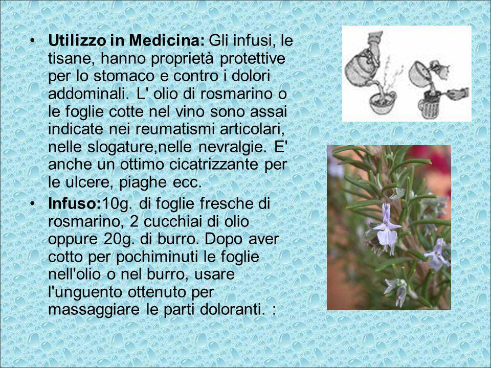 Utilizzo in Medicina: Gli infusi, le tisane, hanno proprietà protettive per lo stomaco e contro i dolori addominali. L' olio di rosmarino o le foglie