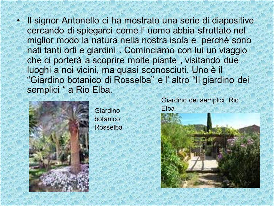L Elba è tutta un grande giardino e la natura è il miglior giardiniere L uomo ha modificato la natura per addomesticarla ai suoi bisogni naturali: mangiare, bere, lavarsi,vestirsi.