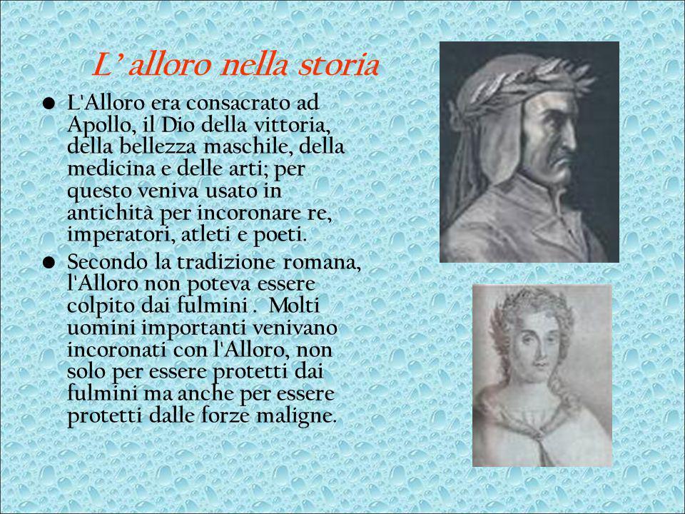 L alloro nella storia L'Alloro era consacrato ad Apollo, il Dio della vittoria, della bellezza maschile, della medicina e delle arti; per questo veniv