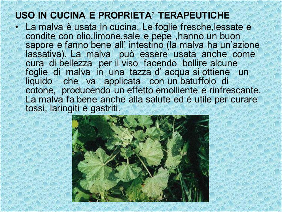 USO IN CUCINA E PROPRIETA TERAPEUTICHE La malva è usata in cucina. Le foglie fresche,lessate e condite con olio,limone,sale e pepe,hanno un buon sapor