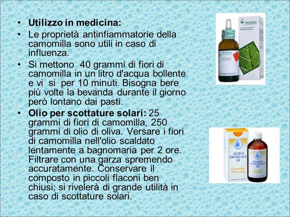 Utilizzo in medicina: Le proprietà antinfiammatorie della camomilla sono utili in caso di influenza. Si mettono 40 grammi di fiori di camomilla in un