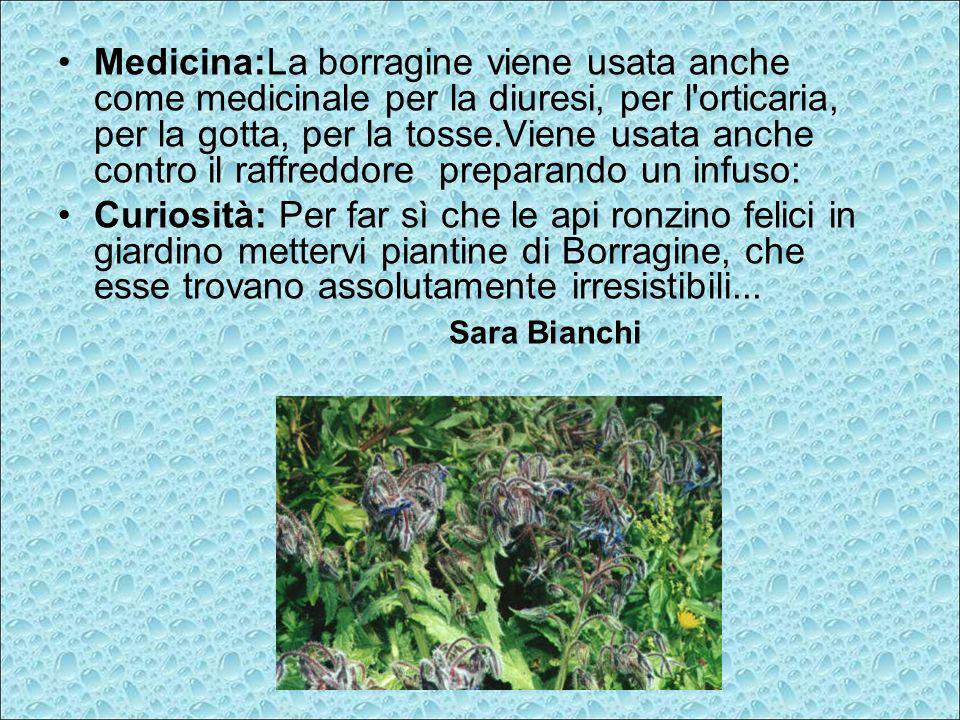 Medicina:La borragine viene usata anche come medicinale per la diuresi, per l'orticaria, per la gotta, per la tosse.Viene usata anche contro il raffre