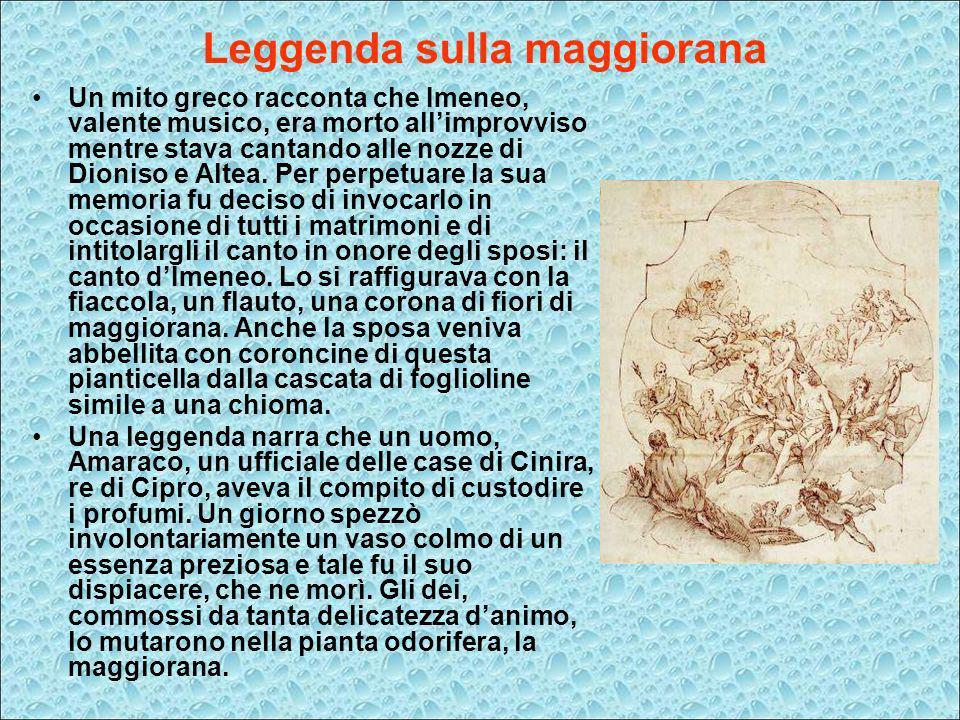 Leggenda sulla maggiorana Un mito greco racconta che Imeneo, valente musico, era morto allimprovviso mentre stava cantando alle nozze di Dioniso e Alt