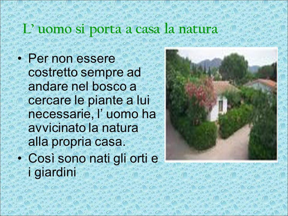 L uomo si porta a casa la natura Per non essere costretto sempre ad andare nel bosco a cercare le piante a lui necessarie, l uomo ha avvicinato la nat