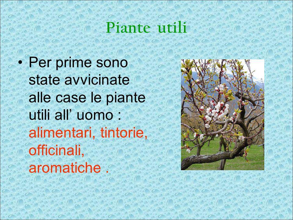 Piante utili Per prime sono state avvicinate alle case le piante utili all uomo : alimentari, tintorie, officinali, aromatiche.