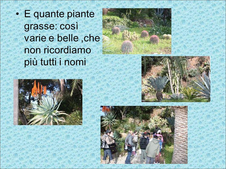 E quante piante grasse: così varie e belle,che non ricordiamo più tutti i nomi