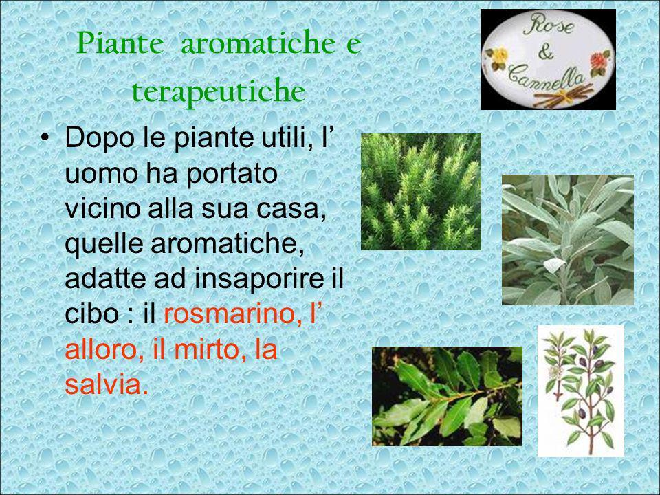 Piante aromatiche e terapeutiche Dopo le piante utili, l uomo ha portato vicino alla sua casa, quelle aromatiche, adatte ad insaporire il cibo : il ro