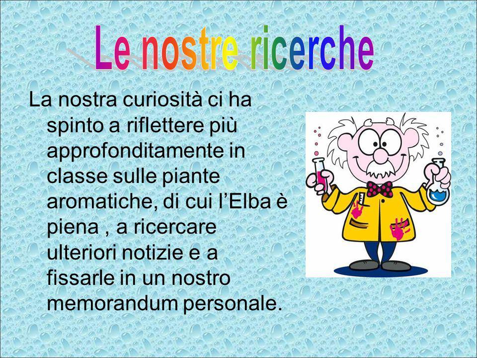 LALLORO : Laurus Nobilis NOME POPOLARE: Lauro, Alloro, Melauro, Orbano.