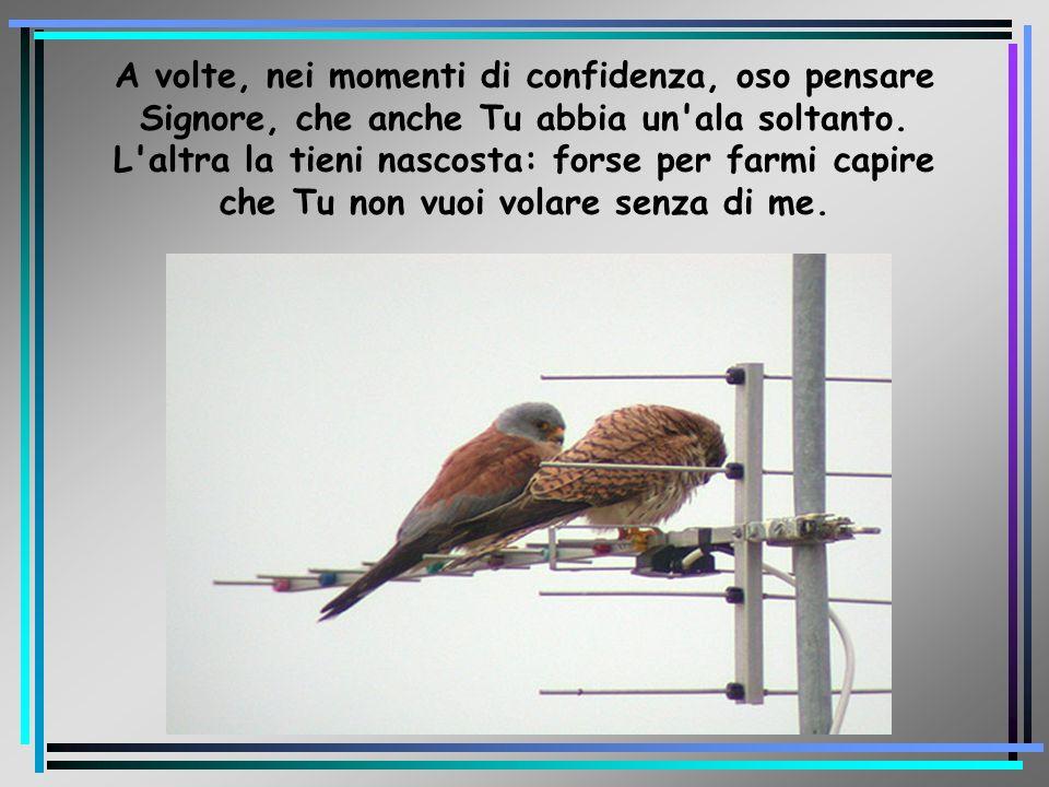 A volte, nei momenti di confidenza, oso pensare Signore, che anche Tu abbia un'ala soltanto. L'altra la tieni nascosta: forse per farmi capire che Tu