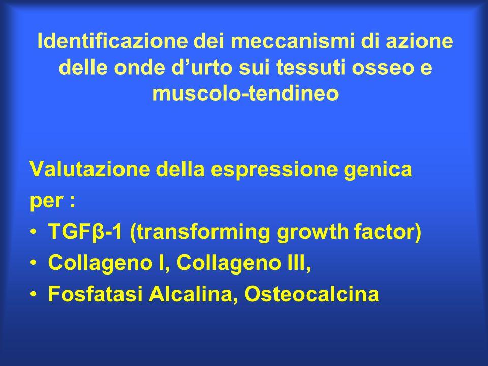 Identificazione dei meccanismi di azione delle onde durto sui tessuti osseo e muscolo-tendineo Valutazione della espressione genica per : TGFβ-1 (tran