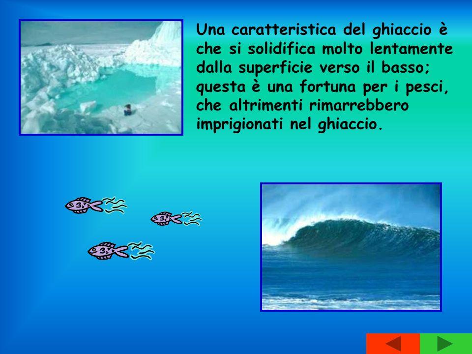 Una caratteristica del ghiaccio è che si solidifica molto lentamente dalla superficie verso il basso; questa è una fortuna per i pesci, che altrimenti