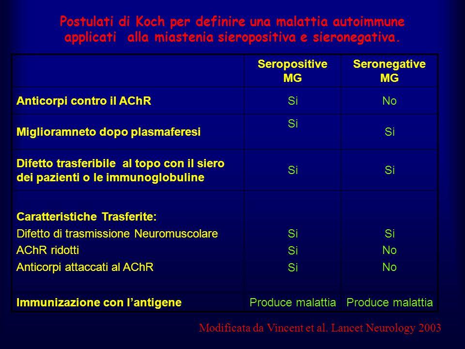 Postulati di Koch per definire una malattia autoimmune applicati alla miastenia sieropositiva e sieronegativa. Seropositive MG Seronegative MG Anticor