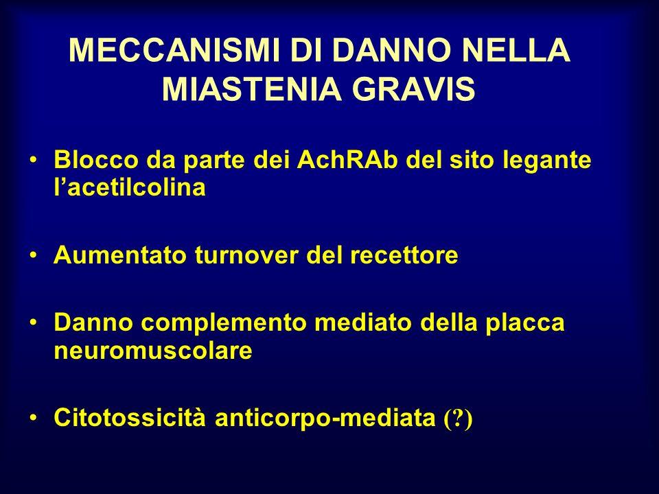 MECCANISMI DI DANNO NELLA MIASTENIA GRAVIS Blocco da parte dei AchRAb del sito legante lacetilcolina Aumentato turnover del recettore Danno complement