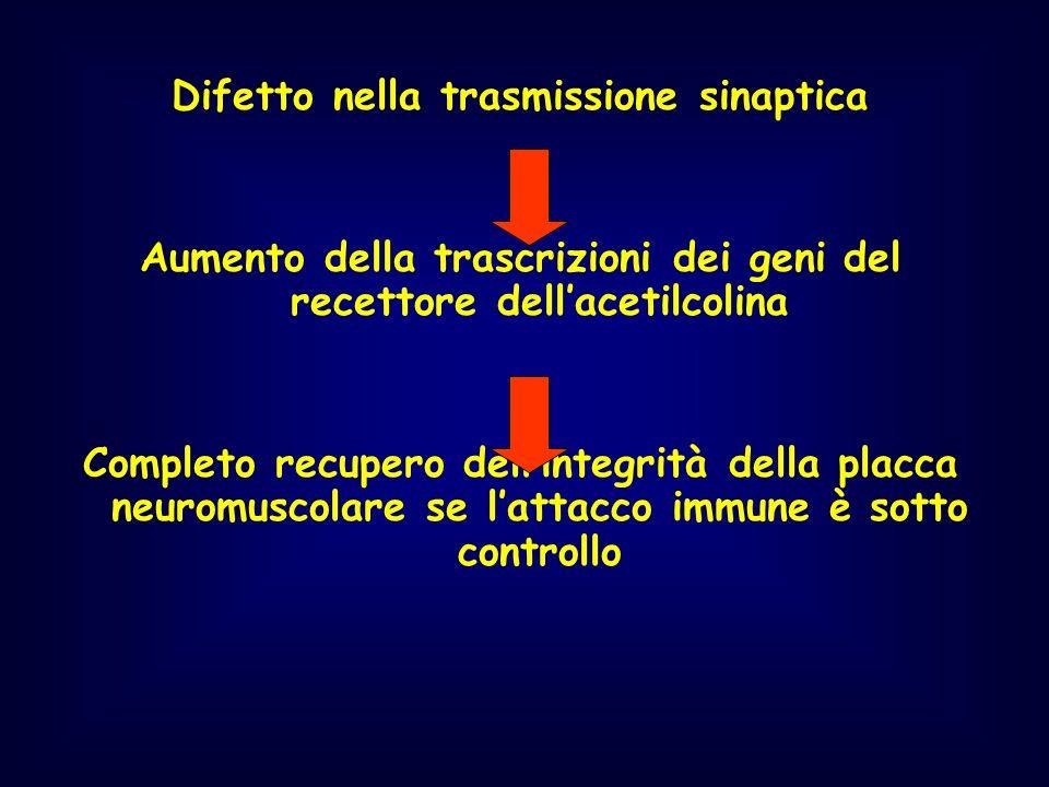 Difetto nella trasmissione sinaptica Aumento della trascrizioni dei geni del recettore dellacetilcolina Completo recupero dellintegrità della placca n