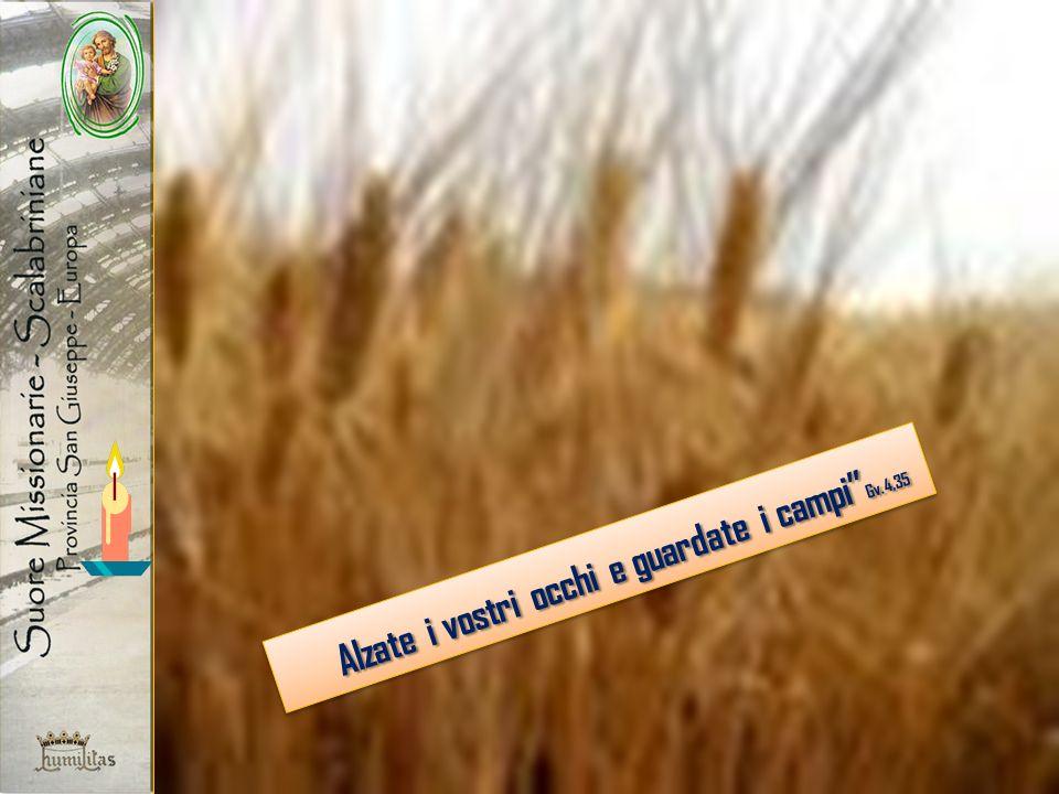 Alzate i vostri occhi e guardate i campi Gv.4,35 Alzate i vostri occhi e guardate i campi Gv.4,35