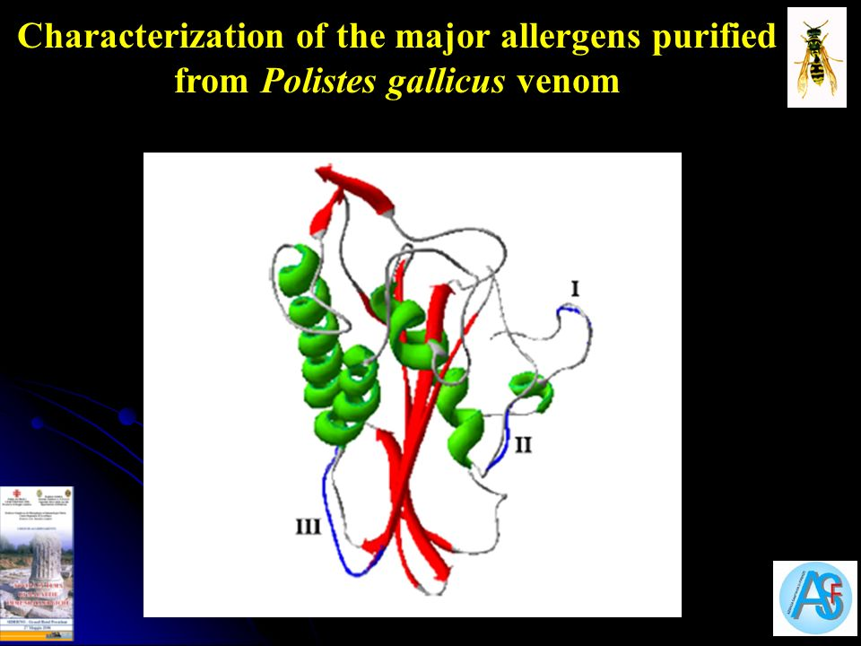 Characterization of the major allergens purified from Polistes gallicus venom