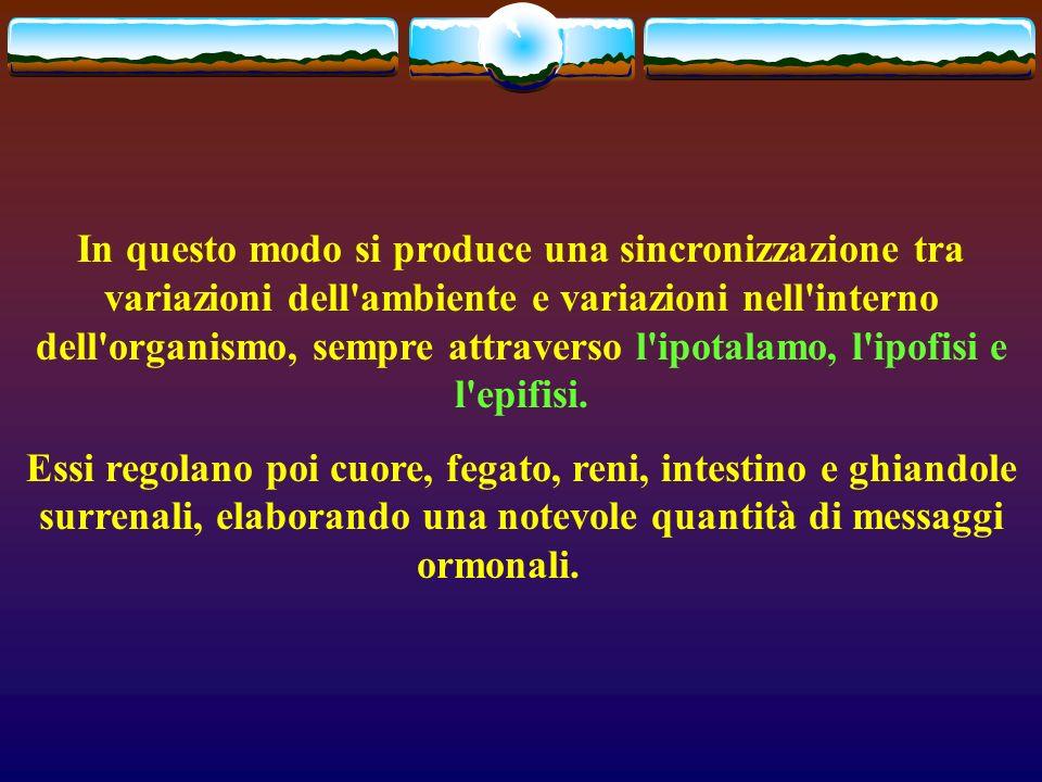 In questo modo si produce una sincronizzazione tra variazioni dell ambiente e variazioni nell interno dell organismo, sempre attraverso l ipotalamo, l ipofisi e l epifisi.