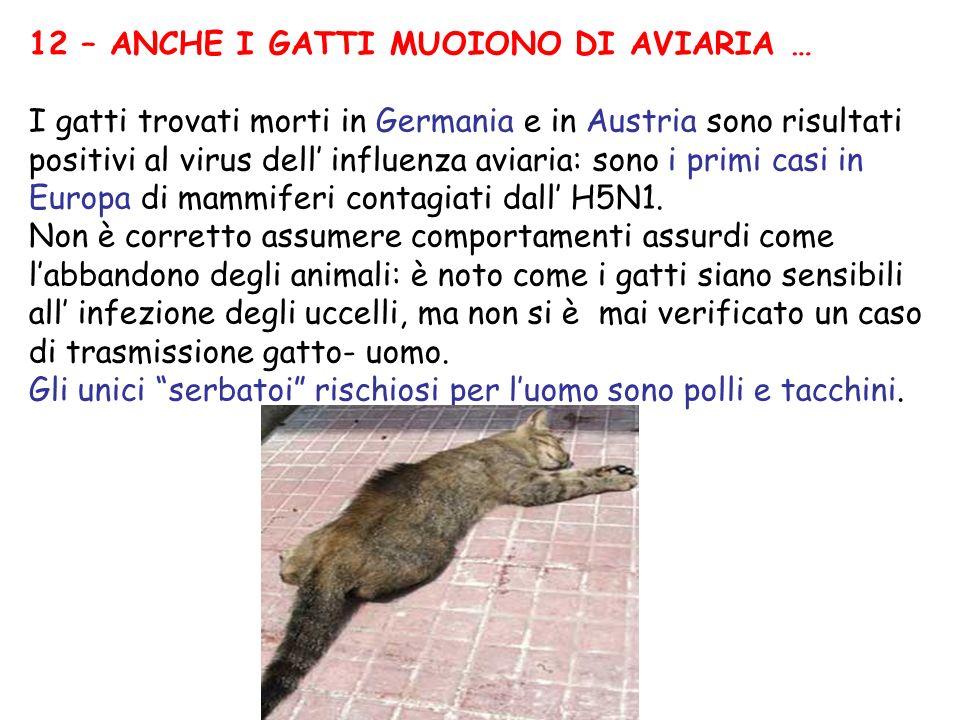 12 – ANCHE I GATTI MUOIONO DI AVIARIA … I gatti trovati morti in Germania e in Austria sono risultati positivi al virus dell influenza aviaria: sono i