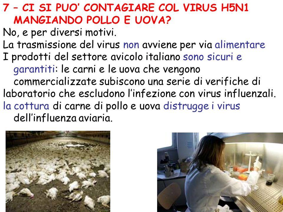 7 – CI SI PUO CONTAGIARE COL VIRUS H5N1 MANGIANDO POLLO E UOVA? No, e per diversi motivi. La trasmissione del virus non avviene per via alimentare I p