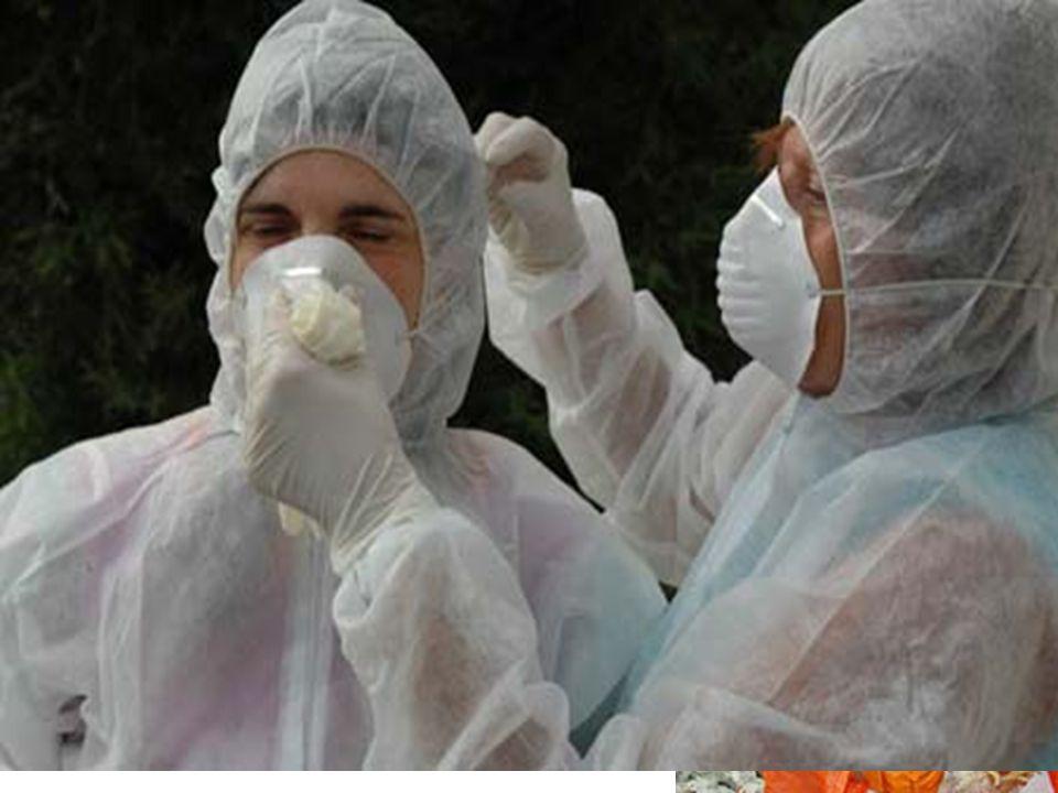 10 – SINTOMI Negli esseri umani, è stato trovato che l influenza aviaria causa sia sintomi simili ad altri tipi d influenza: febbre; tosse; gola irritata; dolori muscolari congiuntivite in alcuni casi, può causare problemi respiratorie polmonite, può essere fatale.