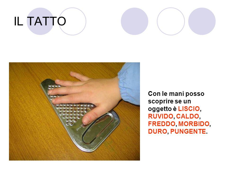 IL TATTO Con le mani posso scoprire se un oggetto è LISCIO, RUVIDO, CALDO, FREDDO, MORBIDO, DURO, PUNGENTE.