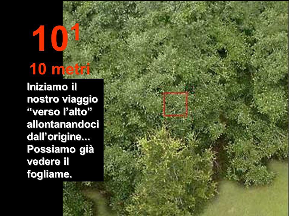 Distanza fino ad un ramo con foglie, con il braccio disteso... 10 0 1 metro
