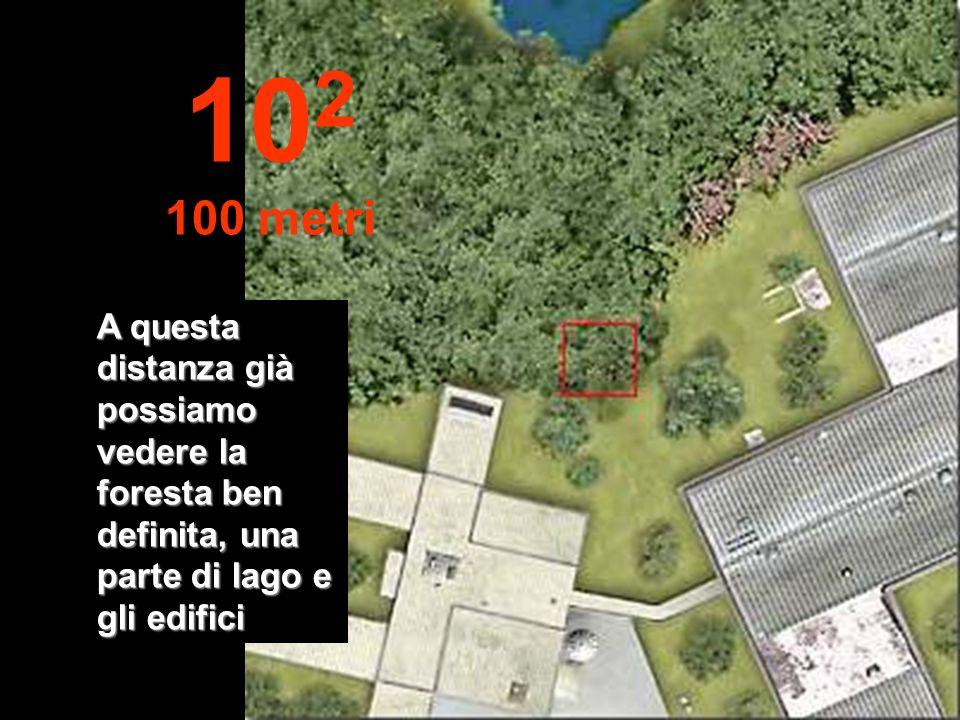 Iniziamo il nostro viaggio verso lalto allontanandoci dallorigine... Possiamo già vedere il fogliame. 10 1 10 metri