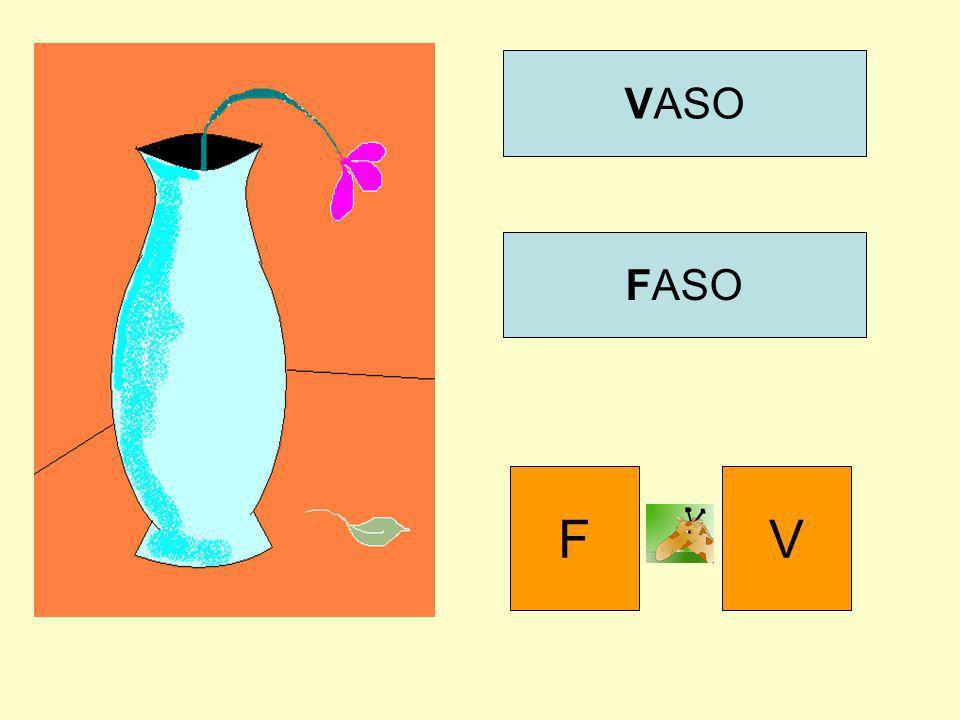 VASO FASO FV