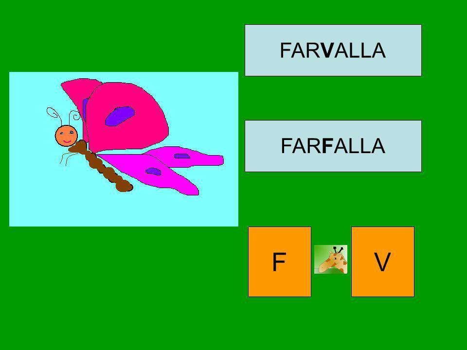 FARVALLA FARFALLA FV